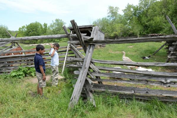kids at fence farm animals