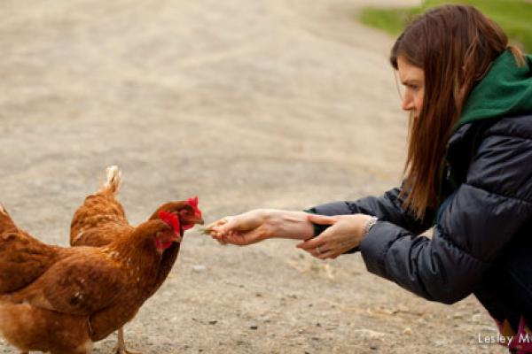 Guests interact with chickens and other farm animal residents of the sanctuary!