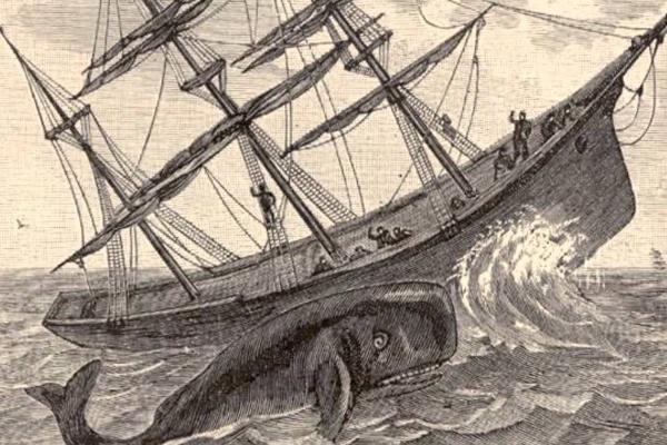 Whale swims beside a ship.