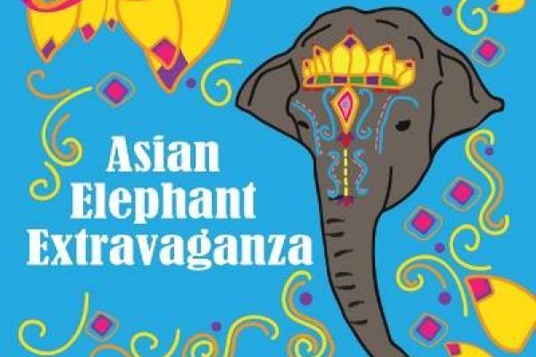 Asian Elephant Extravganza