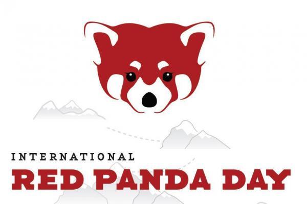 International Red Panda