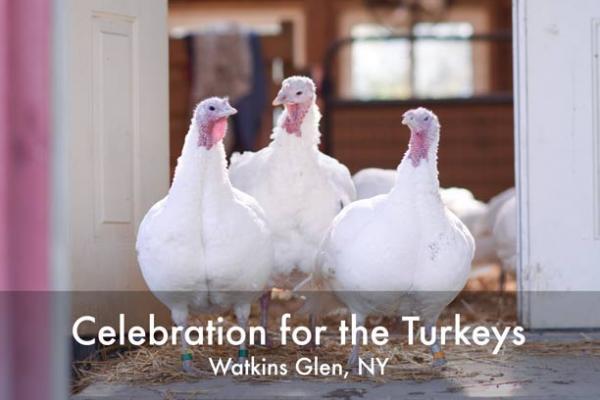 3 turkeys event poster