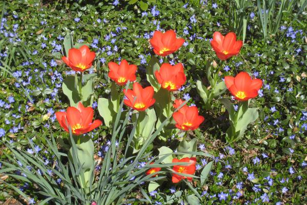 Spring, Easter, Flowers