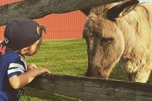 little boy with donkey