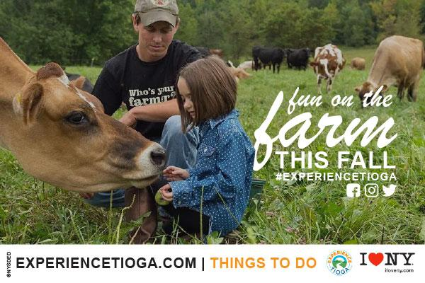 father kneeling by daughter in field petting a cow white text overlay in lawn 'fun on the farm this fall #experiencetioga'