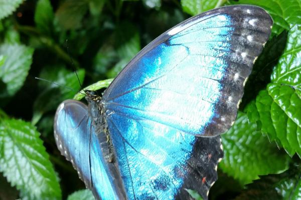 Morpho Magic