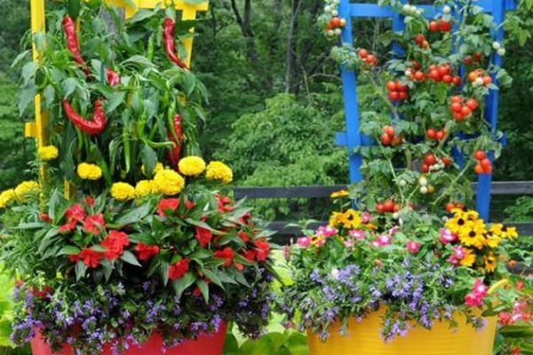 Veggies in planters