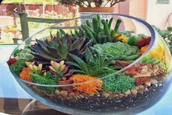 Succulent plants in terrarium