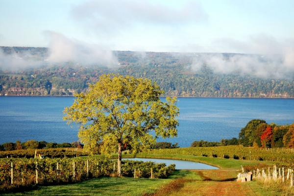 Celebrate the Finger Lakes